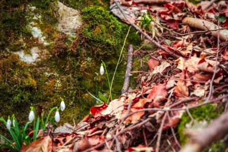Photo pour Paysage printanier dans la forêt - image libre de droit