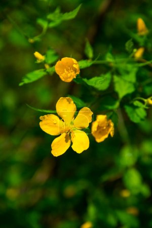 Photo pour Belles fleurs méditerranéennes en île de Zante, Grèce - image libre de droit
