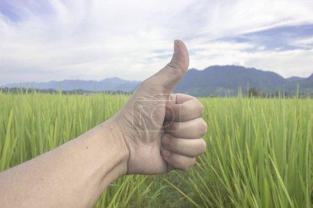 Photo pour Riz vert de nature classé avec le point de main comme le fond beuatiful de paysage de ciel bleu - image libre de droit
