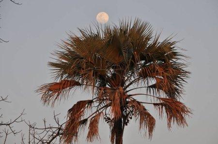 Photo pour Paysage du parc National de Chobe - image libre de droit