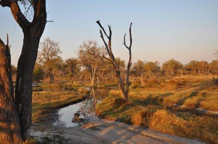 Photo for Bright landscape view of Okavango Delta, Botswana - Royalty Free Image
