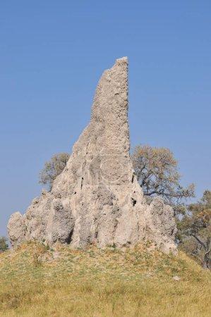 Photo pour Termitière dans le parc National, Botswana - image libre de droit
