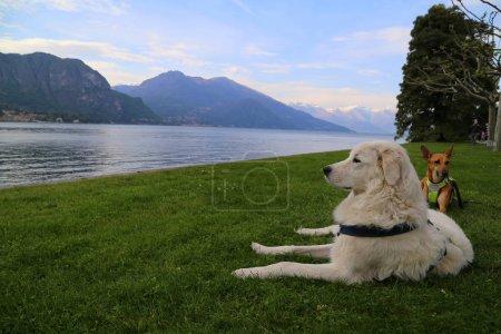 perro relajante en el jardín de la villa Melzi, Bellagio, Italia