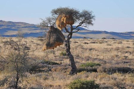 vue sur la loge namibienne dans le désert