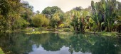 Friar Leandro Lake at Jardim Botanico Botanical Garden - Rio de Janeiro, Brazil