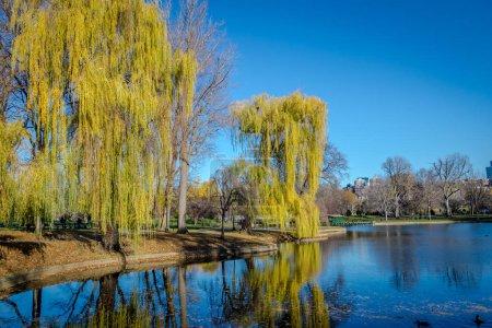 Boston Public Garden Boston Massachusetts