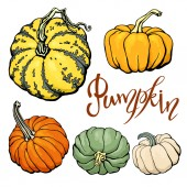 Design template print with orange green beige pumpkins Vector Halloween illustration