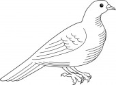 Beautiful doveHeraldry Hand drawn Isolated on white vector illustration