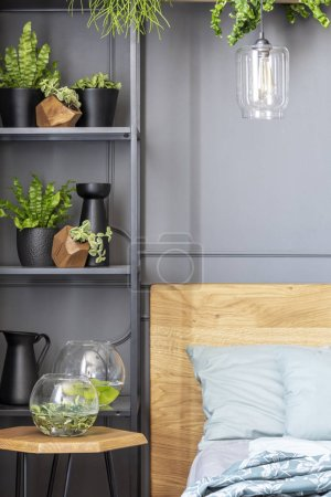 Photo for Close-up of shelves with plants and glass bowls next to a bed - Royalty Free Image