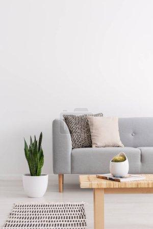 Photo pour Plante à côté du canapé gris avec coussins dans le salon intérieur avec tapis et table en bois. Une vraie photo - image libre de droit