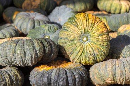 Calabaza verde vegetal de la agricultura cosecha en el mercado. Agr.