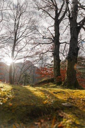 Photo for Idyllic landscape in the timberland, outdoors, sunshine - Royalty Free Image