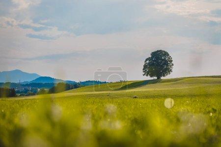 Photo pour L'arbre est debout sur un champ vert frais. Personne, paysage idyllique - image libre de droit