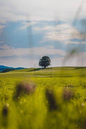 Idyllic landscape scenery in summer: Tree and green meadow, blue
