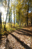 Beautiful forest in autumn, bright sunny day