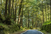 Mountain road in green forest