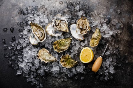 Open fresh Oysters with lemon on ice on dark background
