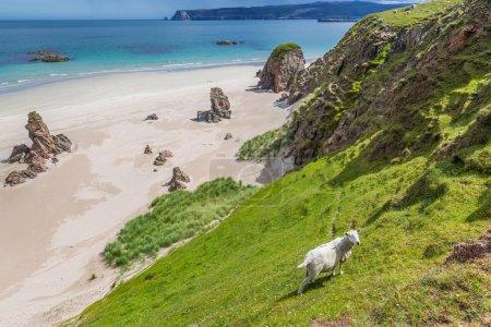 Photo pour Vue panoramique sur le magnifique paysage écossais - image libre de droit