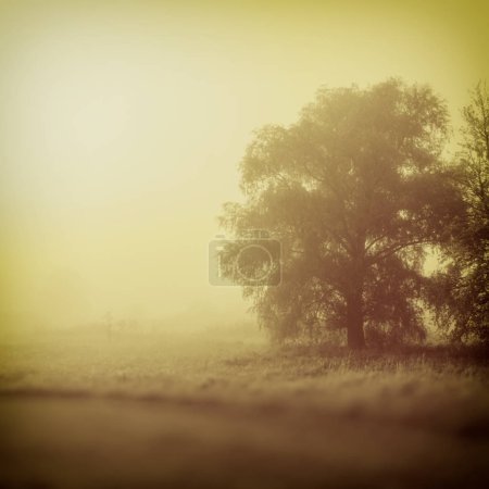 Photo for Blurred background, landscape tree in fog countryside - Royalty Free Image