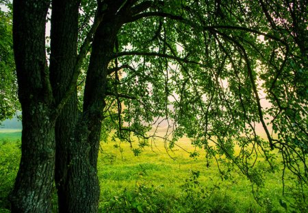 Photo for Landscape with tree branches against the backdrop of the village in the morning - Royalty Free Image