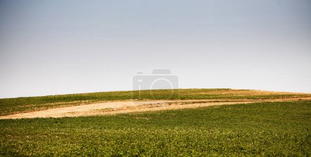 Photo for Green grass field on small hills and blue sky with clouds. - Royalty Free Image