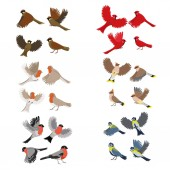 Collection of birds robin red cardinal tits sparrow bullfinches waxwing Isolated on white background