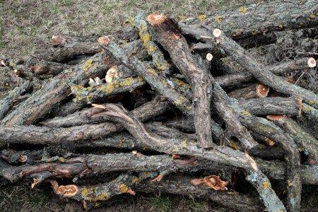Photo pour Gros tas de coupé les branches - image libre de droit