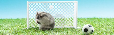 panoramic shot of hamster near football gates and ball on green grass, sports betting concept