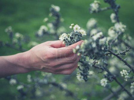Photo pour Main femelle touchant le lichen sur des branches d'arbre - image libre de droit