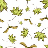 Seamles scolored maple leaf and seeds pattern Vector vintage colored engraved illustration of maple leaf Green leaf on begie background Vector maple autumn drawing leaf Isolated object