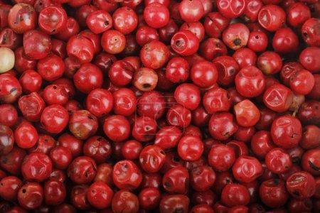 Foto de Primer plano de grano de pimienta rosa, fondo de comida - Imagen libre de derechos