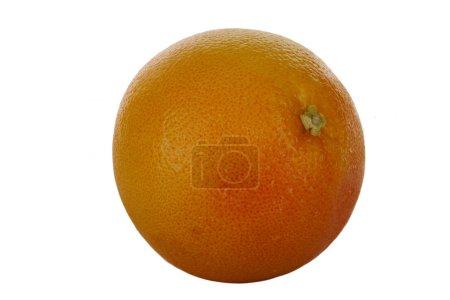 Photo pour Plan rapproché de fruit orange. Agrumes tropicaux - image libre de droit