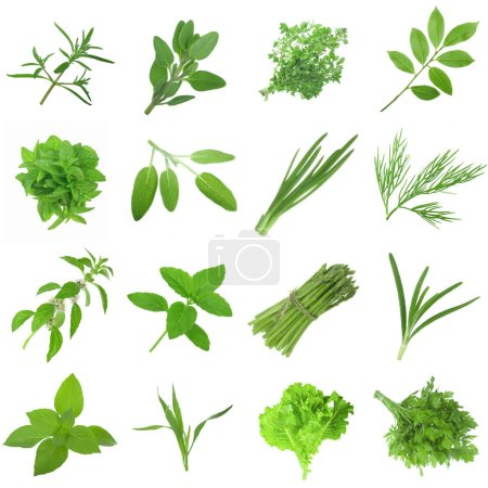 Photo for Closeup of assorted herbs isolated on white background - Royalty Free Image