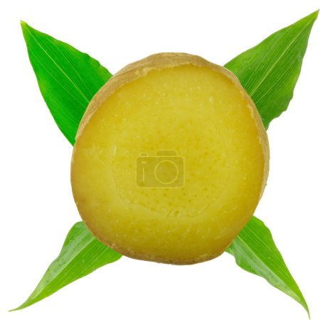 Photo for Slice of ginger isolated on white background - Royalty Free Image