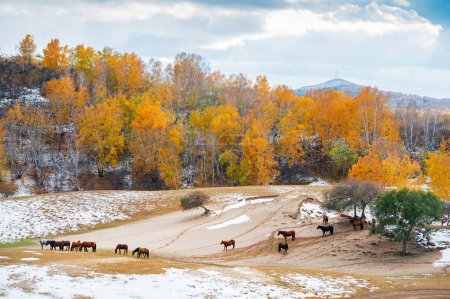 Horses grazing on autumnal pasture in Inner Mongol...