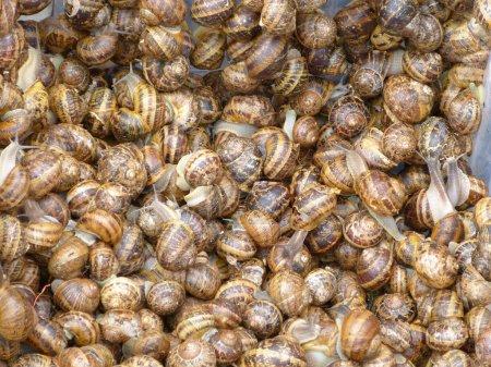 Photo pour Escargot dans un marché hebdomadaire de village - image libre de droit