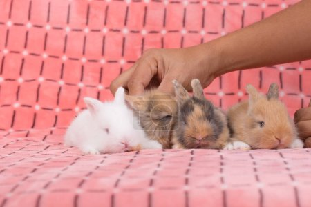 Adorable young baby rabbits on pink cloth background. 3 weeks old little fluffy bunnies