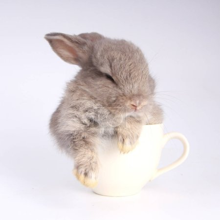 Photo for Baby adorable rabbit on white background. Young cute bunny in action. Lovely pet with fluffy hair. Easter has rabbit as symbol celebration. - Royalty Free Image