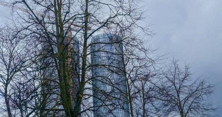 Photo pour Vue du bas vers le haut, les arbres ne feuilletent pas sur le fond bleu de ciel, derrière des arbres il y a deux tours en verre avec la grue à eux - image libre de droit