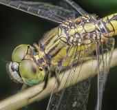 Close shot of dragonfly