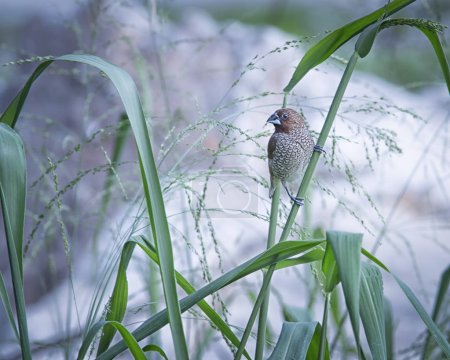 Sparrow on the grass branch....