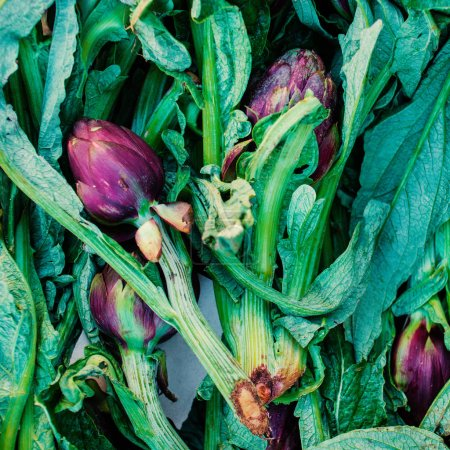 Vegetable background with fresh artichokes with green stems.
