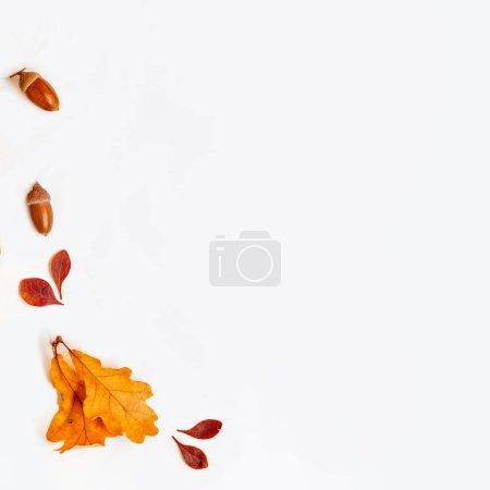 Photo pour Composition automnale avec érable doré et feuilles de chêne sur fond blanc. Automne vente fond disposition décorer avec des feuilles. Pose plate. Vue de dessus. Espace de copie - image libre de droit