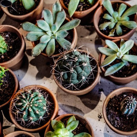 Photo for Set of house indoor succulent plants and cactus in pots. - Royalty Free Image