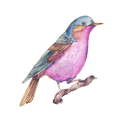 Photo pour Aquarelles colorées oiseaux isolés sur fond blanc, illustration naturelle, collection d'oiseaux aquarelle, illustration mignonne - image libre de droit