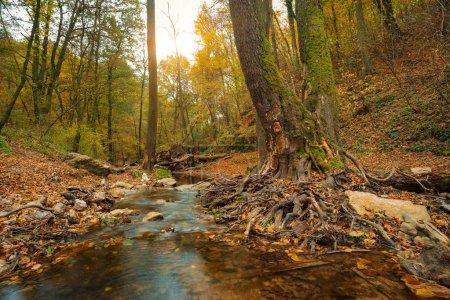 Photo pour Ruisseau en forêt d'automne - image libre de droit