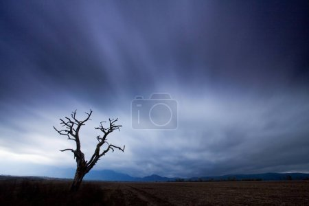 Photo for Scenic view of foggy field and tree, selective focus - Royalty Free Image