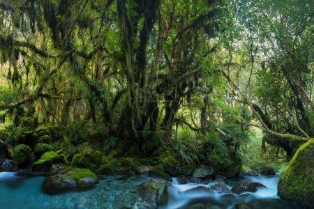 Photo pour Vue scénique de forêt, de pierres et de ruisseau à l'été - image libre de droit