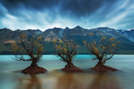 Photo for Scenic view of trees reflecting in water under overcast sky - Royalty Free Image