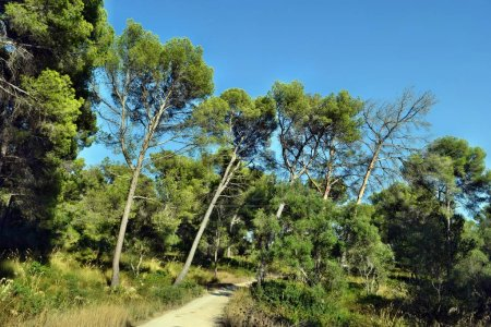 Photo for Forestry road to puig de sant marti - Royalty Free Image